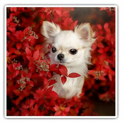 2 X Square Stickers 7.5 Cm - White Chihuahua Puppy Dog Red Flowers  #46421 • 2.49£