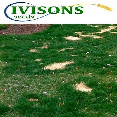 £21.99 • Buy 5kg Ivisons Fast Growing Rapid Lawn Recovery Grass Seed Quick Repair Pets Dogs