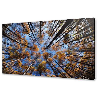 £39.99 • Buy Looking Up Blue Sky Yellow Trees Nature Forest Canvas Print Wall Art Picture