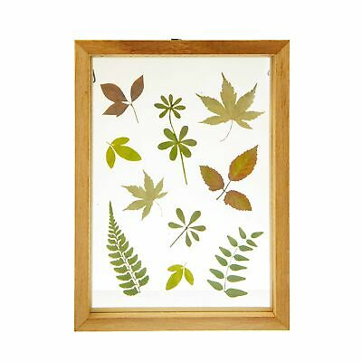 Sass And Belle Herbarium Leaves Floating Frame Photos Pictures Gift • 12.99£