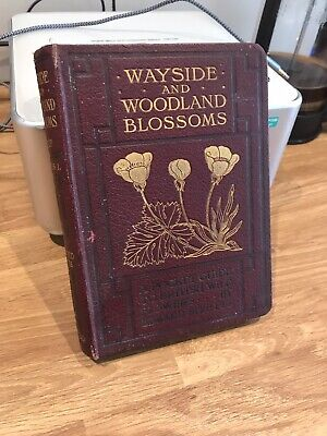Wayside And Woodland Blossoms, STEP, Edward 1905 First Series New Ed • 15£
