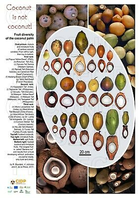 £8.62 • Buy Poster Coconut Fruit Diversity, Cocos Nucifera, Agriculture - Sample INCOMPLETE