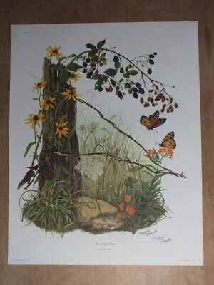 $ CDN48.99 • Buy Signed Lithograph By Maryrose Wampler  - Black-eyed Susan - Wildlife Collector