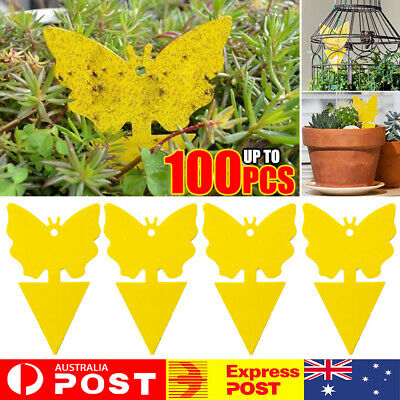 AU8.92 • Buy 10~100X Dual Sided Sticky Trap Insect Killer Whitefly Thrip Fruit Fly Gnat QA