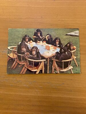 Chimps Tea Party Postcard Published By Zoological Society Of London  • 0.99£