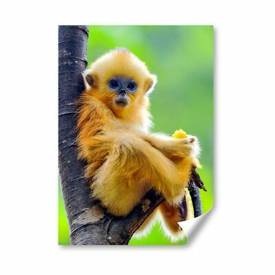 £4.99 • Buy A4 - Golden Snub Nosed Monkey Baby Poster 21X29.7cm280gsm #45180