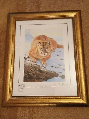£15 • Buy Stephen Gayford Limited Edition Of 1100  Ready To Pounce  - Cougar - 43 X 35 Cm