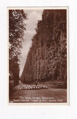 £2.99 • Buy Real Photo Postcard The Beech Hedge, Blairgowrie.