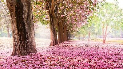 £10.99 • Buy Pink Blossom Countryside Trees Flower Landscape Wall Art Poster / Canvas Picture