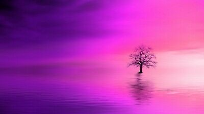 £10.99 • Buy Abstract Lonely Tree Pink Sunset Bright Landscape Wall Art Poster/Canvas Picture