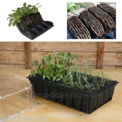 RAPID ROOTRAINERS PROPAGATOR SYSTEM, Root Trainers, Propagator Lid, Seed Tray • 27.25£