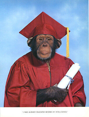 $ CDN12.53 • Buy 1 Vintage Art Photo Page Chimp Chat 1960's Monkey Graduate Graduation Cap Gown