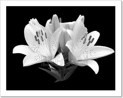 $1.99 • Buy Black And White Flower Lily. Art Print Home Decor Wall Art Poster - D
