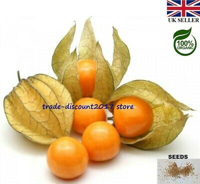 £3 • Buy 50 Seeds Of Edible Cape Gooseberry (Physalis Peruviana) Hardy Perennial Plant