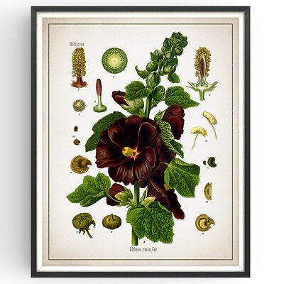 Hollyhock Botanical Print Flower Decor Vintage Wall Art Picture Poster Gift • 9.99£