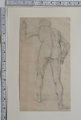 1910 Antique Original Print Timoteo Viti Study Of Nude From The Back • 48£