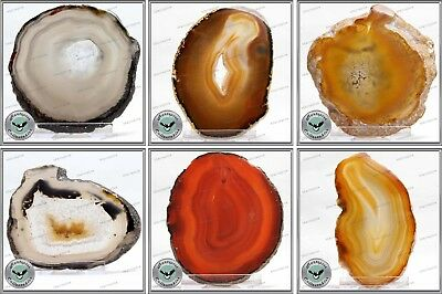 AGATE A Selection Of Yellow Medium Sized Agate Slices On Display Stands • 18.99AU