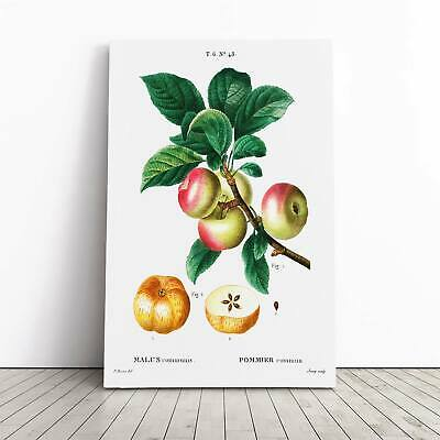 Apple Tree Branch Flowers Pierre-Joseph Redoute Framed Canvas Print Wall Art • 22.95£