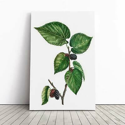Black Mulberry Tree Flowers Pierre-Joseph Redoute Framed Canvas Print Wall Art • 24.95£