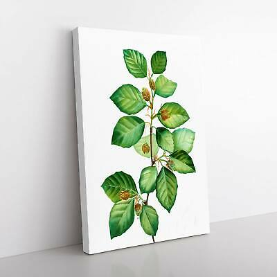 Beech Tree Branch Flowers Pierre-Joseph Redoute Framed Canvas Print Wall Art • 22.95£