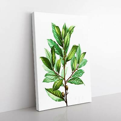 Bay Laurel Tree Flowers Pierre-Joseph Redoute Framed Canvas Print Wall Art • 19.95£