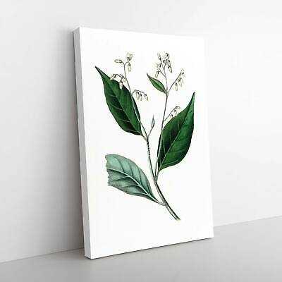 £24.95 • Buy Gum Benjamin Tree Illustration Canvas Print Wall Art Picture Large Home Decor