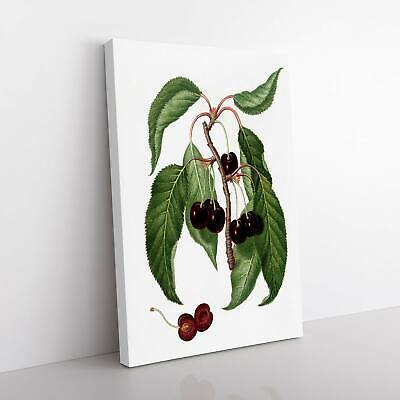 Hard-fleshed Cherry Tree Flowers Giorgio Gallesio Framed Canvas Print Wall Art • 19.95£