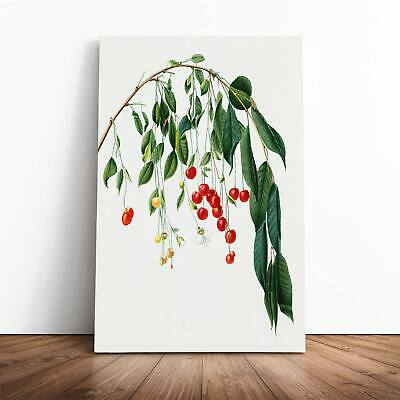 Visciola Cherry Tree Flowers Giorgio Gallesio Framed Canvas Print Wall Art • 22.95£