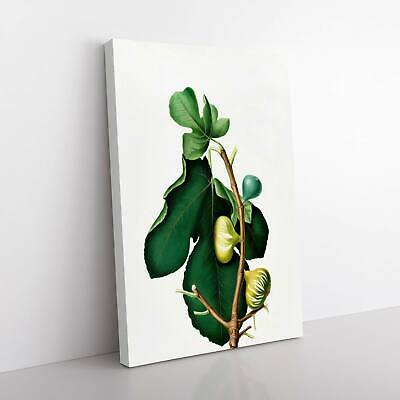 White-peel Fig Tree Flowers Giorgio Gallesio Framed Canvas Print Wall Art • 22.95£