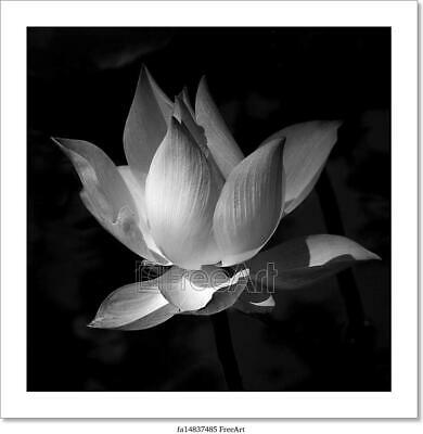 $26.95 • Buy Black And White Lotus Art/Canvas Print. Poster, Wall Art, Home Decor