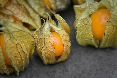 Cape Gooseberry Seeds - Physalis Peruviana - 0.2g - Approx. 200 Seeds • 2.79£