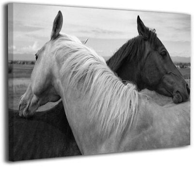 $12.90 • Buy White And Black Horse Home Decor Print On Canvas HD Picture Canvas Art Wall