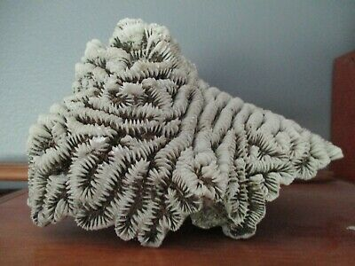 $75 • Buy Vintage Natural White Piece Of Brain Coral From The Keys