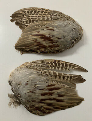 Vintage Partridge Bird Wings Feathers - Taxidermy Curio • 19.99£