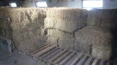 £3 • Buy ORGANIC SMALL BALE MEADOW HAY 2018 (Ideal For Laminitis Prone Animals)