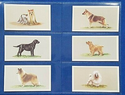 £3.50 • Buy Grandee Cigarette Cigar Cards TOP DOG COLLECTION  - Set Of 25