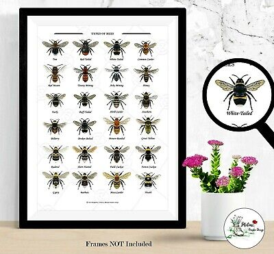 £4.99 • Buy Bumblebee Print Wildlife Bee Collection Wall Art Wildlife Picture Signed A4 A3