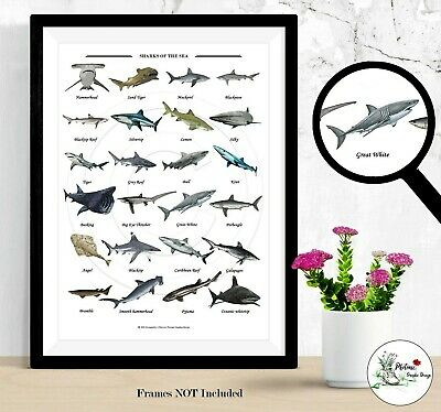 £4.99 • Buy Sharks Sea Life Collection Ocean Deep Blue Wall Art Picture Prints A4 A3 Signed