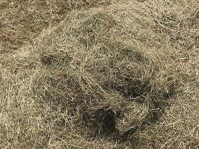 £4 • Buy Small Bales Of Top Quality Hay 2021