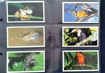 £3.50 • Buy Grandee Cigarette Cards.DISAPPEARING RAIN FOREST - Set Of 30 In Sleeves