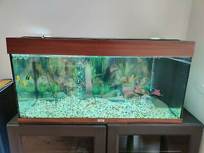 £149.90 • Buy Juwel Aquarium Rio 180 Fish Tank With Assessories Decorations And Fishes
