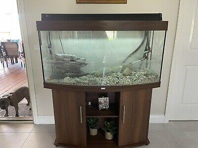 AU250 • Buy Fish Tank Curved Approx 180 Litre
