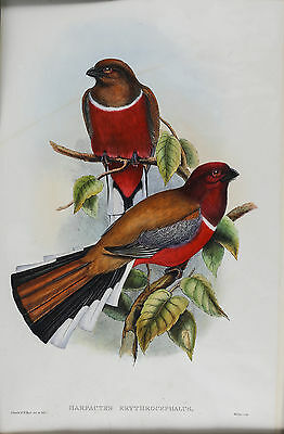 £1150.48 • Buy John Gould & W. Hart Hand Colored Bird Lithograph Harpactues Erythrocephalus