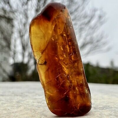 £12 • Buy Spider Insect Inclusion In Baltic Amber Fossil Eocene FSR114 ✔100%genuine