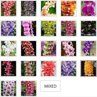 AU9.21 • Buy US- 50Pcs Mixed Colors Phalaenopsis Seeds Bonsai Balcony Flower Orchid Seeds
