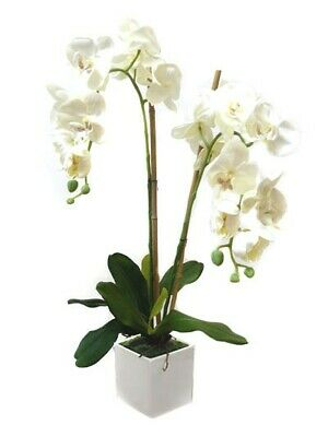 AU38 • Buy New Artificial Fake Silk Flower White Potted Phalaenopsis Orchid 65cm