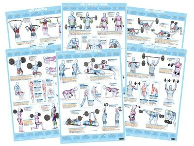 £34.99 • Buy Weight Training Posters Bodybuilding Barbell Dumbbell Exercise Charts