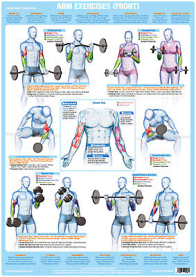 Arm Muscles Weight Lifting And Bodybuilding Poster Exercise Training Gym Chart   • 39.99£
