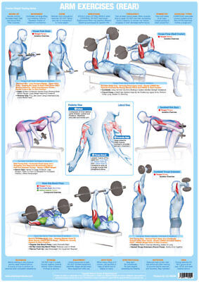 Arm Muscles (Back) Weight Lifting And Bodybuilding Poster Gym Exercise Chart  • 9.99£