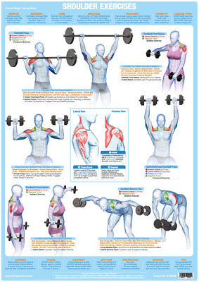 Shoulder Muscles Weight Training And Body Building Poster Gym Exercise Chart  • 9.99£
